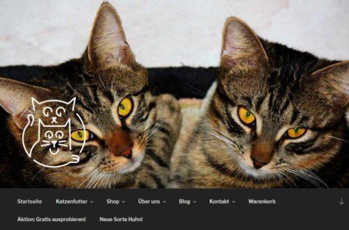 SEO-Optimierungen www.korikusa.ch